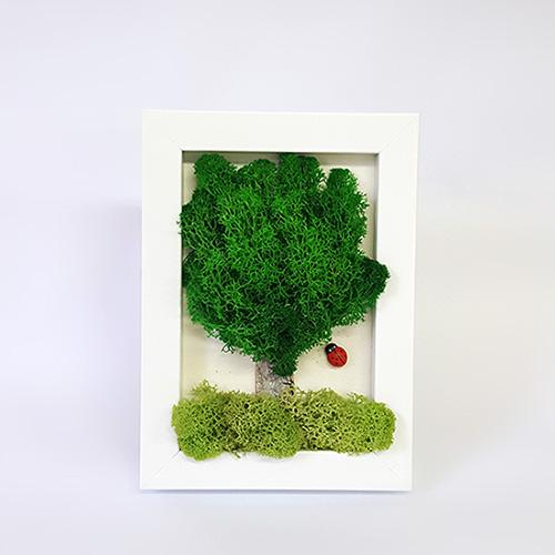 [공기정화식물] 스칸디아모스 액자 (택배상품)